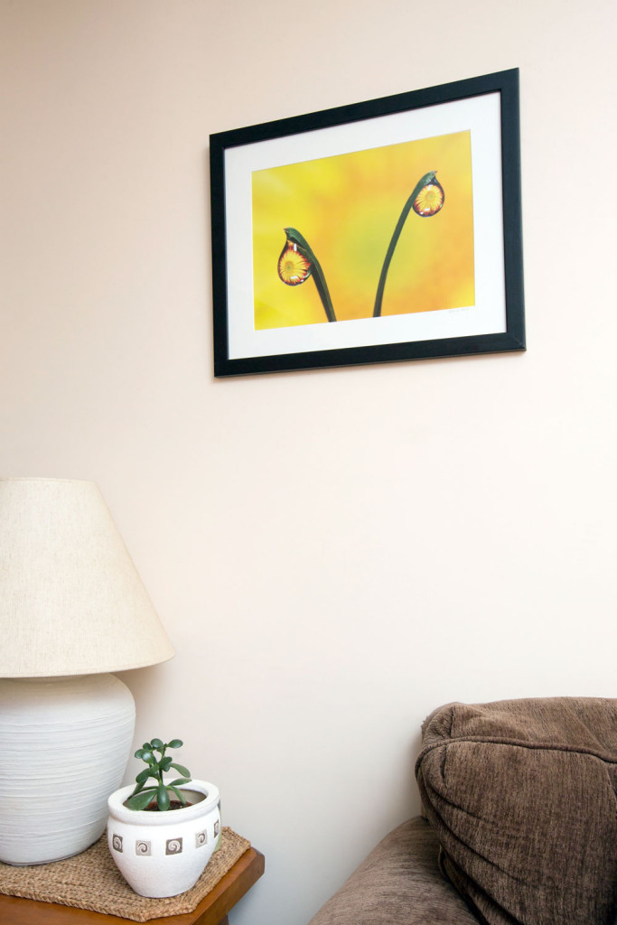 """""""Dew Drops Mums"""" photograph in Michelle's living room."""
