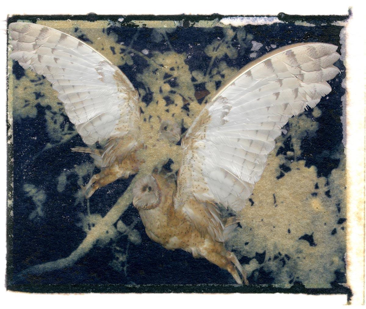 Sandi Daniel Flying Owls @ Stu-Art Supplies